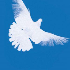 Kölner LINKE zur Friedenspolitik